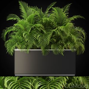 Plants Collection 267