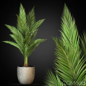 Plants Collection 268