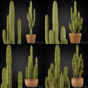 Cactus Collection 01
