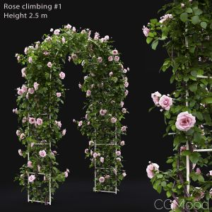 Rose Climbing #1