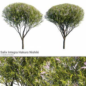 Salix Integra Set 1