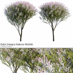 Salix Integra Set 2