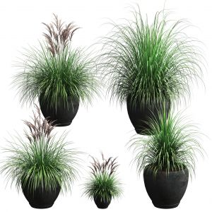 Outdoor Potted Plants. 5 Models