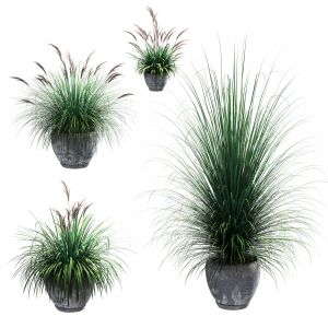 Outdoor Potted Plants. 4 Models