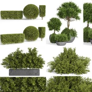 4 sets of outdoor plantst