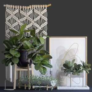 Decorative Set With Ficus