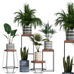 Indoor Plant Sets 01