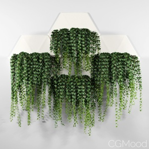 Hexagonal Honeycomb Succulent Wall Planter
