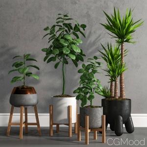Plant Model 1