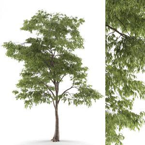 Tree 54 B