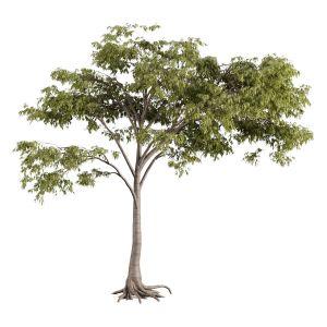 Tree 54 D
