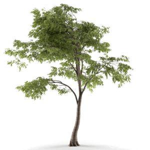 Tree 54 E