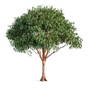 Tree 55 A