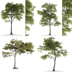 trees 54