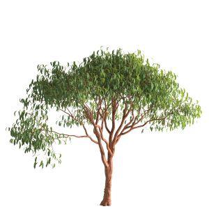 Tree 55 E