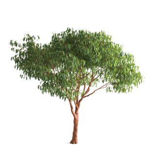 Tree 55 F