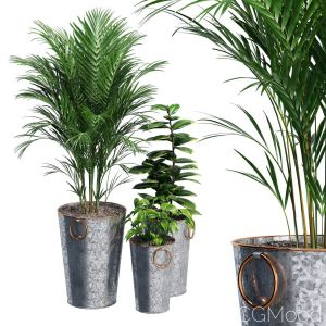 Lillian Galvanized Planters