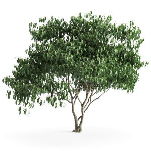 Plant 58 A