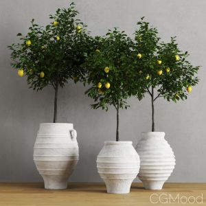 Lemons In Traditional Mediterranean Vases