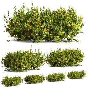 Plant 61 A