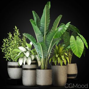 Plants Collection 270