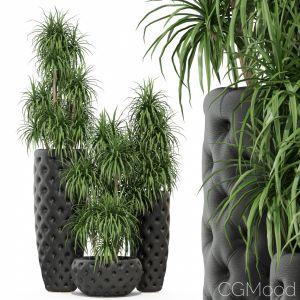Plants Collection 274 Fleurami Club