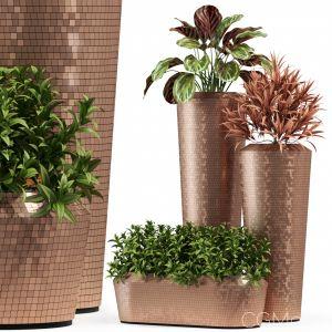 Plants Collection 274 Fleurami Pixel