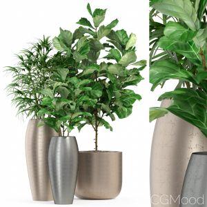 Plants Collection 277 Fleurami Royal