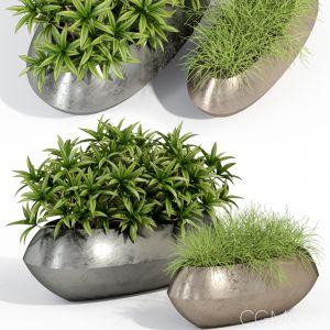 Plants Collection 279 Fleurami Royal