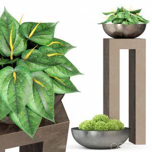 Plants Collection 281 Fleurami Royal