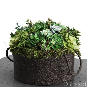 Rh - Faux Assorted Succulent Plant