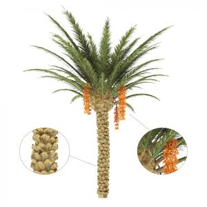 Palm Tree With Date
