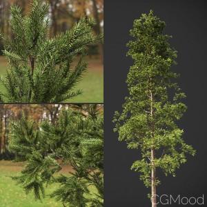 Pine Tree (GeoPattern)