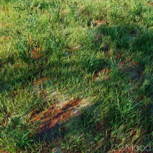 High Details Grass_02