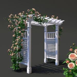 Garden Arch N2. Climbing Peony Rose
