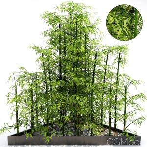 Bamboo Plant 1