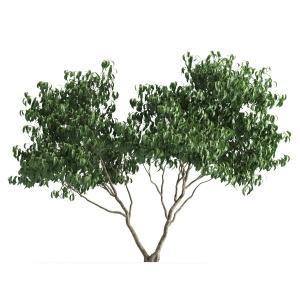 Plant 58 D