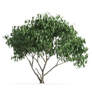 Plant 58 F