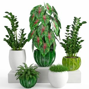 Houseplants 41