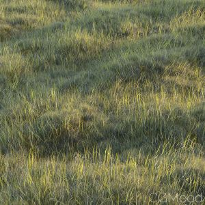 Uncut Forest Grass Collection 01
