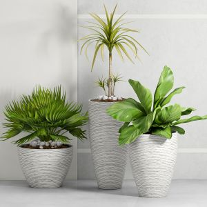 Decorative Plant Set - 15