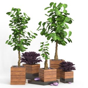 Indoor_plant_set_02