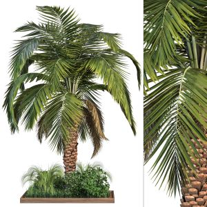 Garden Set Vol1 - Palm Tree And Bush