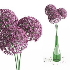 Allium flowers in vase