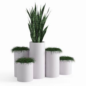Houseplant 46