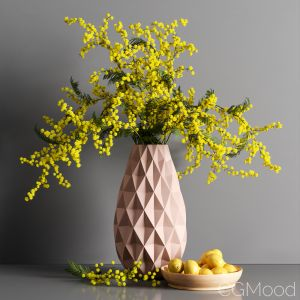 Decorative Mimosa Lemon