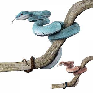 Blue Island Viper