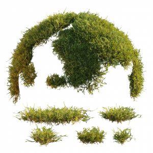 Moss1