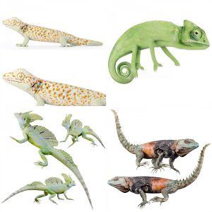 Reptile_set