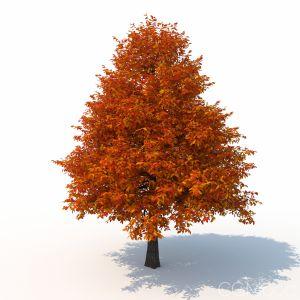 Black Tupelo Tree Autumn Version